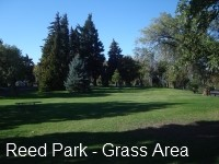 Reed Park - Grass Area - 02.jpg